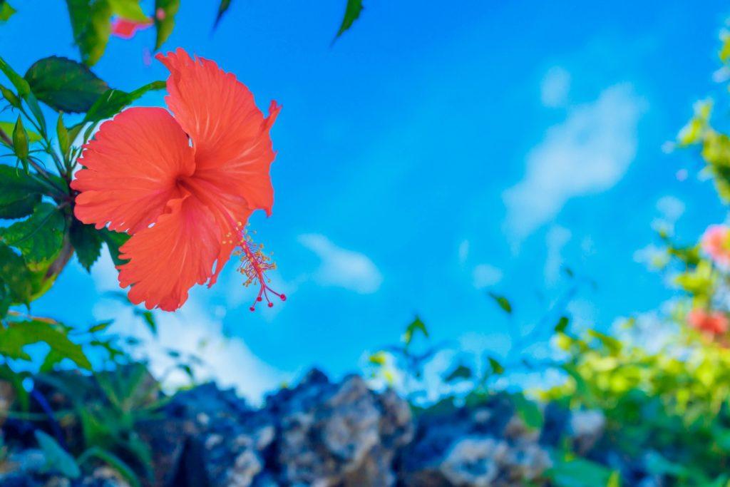 沖縄への移住・引っ越しのイメージ
